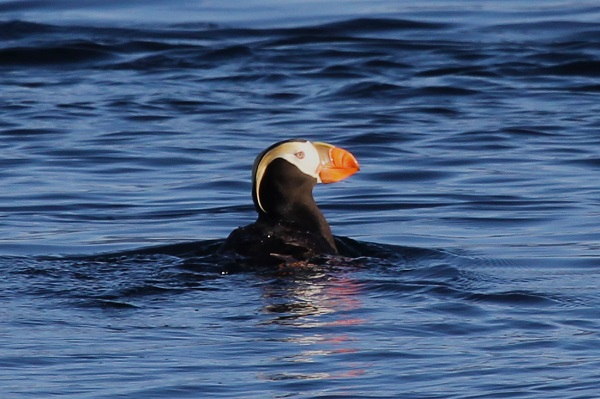 Bluewater-Adventures_PUFFIN-QCI-NBOWES-2012