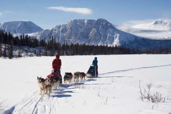 dog-team-with-Mt.behind