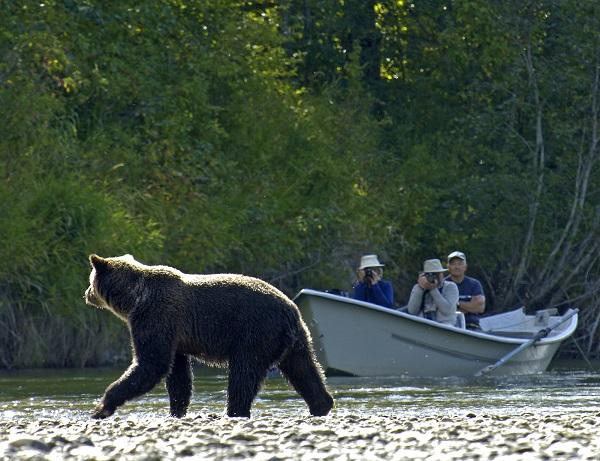 Bear-Viewing-River-Drift-photo-Mike-Wigle-kl