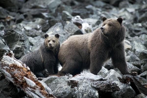 Grizzly-Mom-and-Cub-photo-John-Lehmann-kl