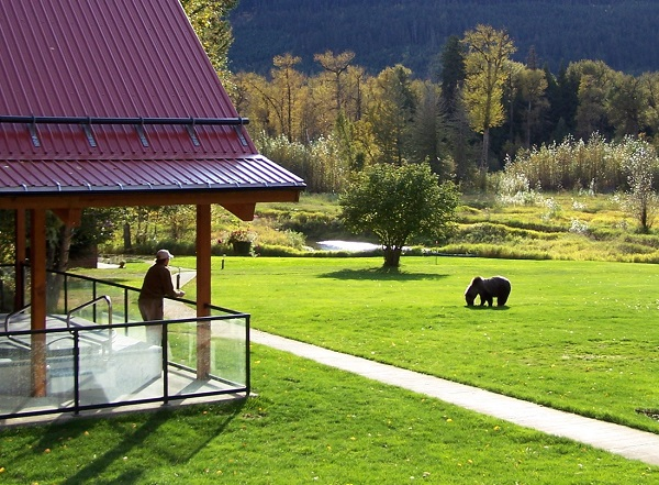 There-is-a-Grizzly-on-the-lawn-small
