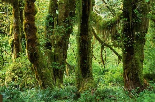 rainforest-kl