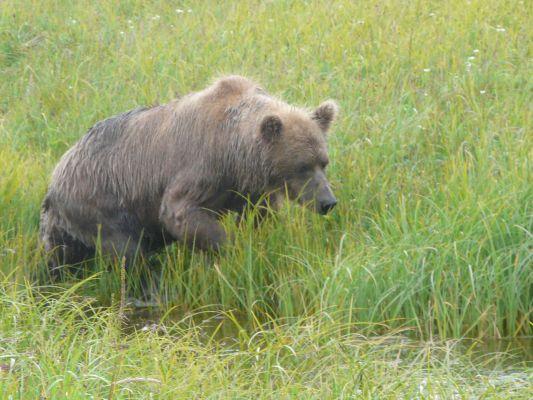 Alaska10-P1040201_Homer_ba