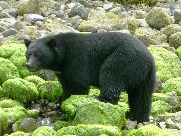 Bären1