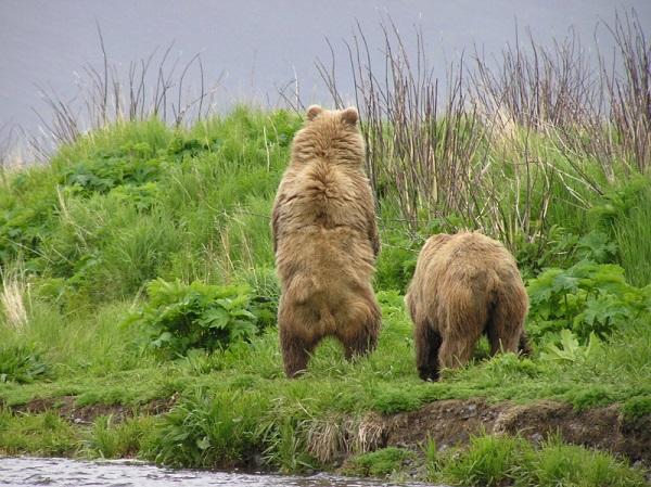 Camp-Island-Thumb-Bears-7-e1428009709271