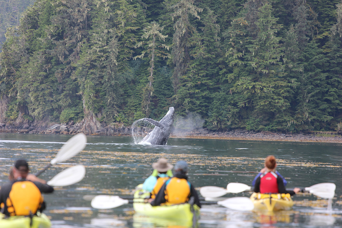 1200-Kayak-with-Whales