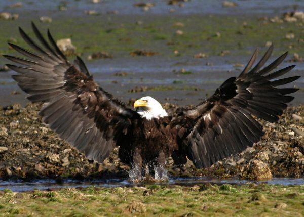 sea-otter-and-wildlife-quest-sitka-ak-1-e1544966534665