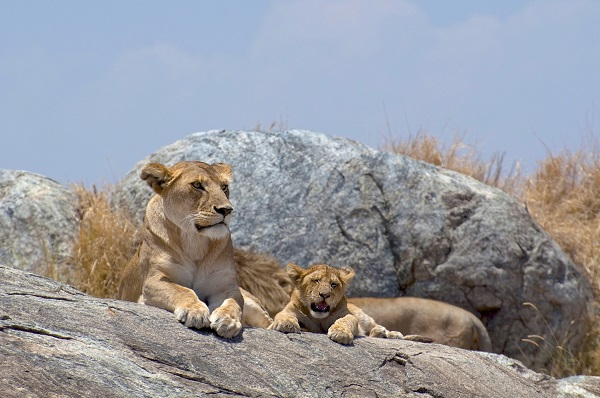 Serengeti-Picture-678